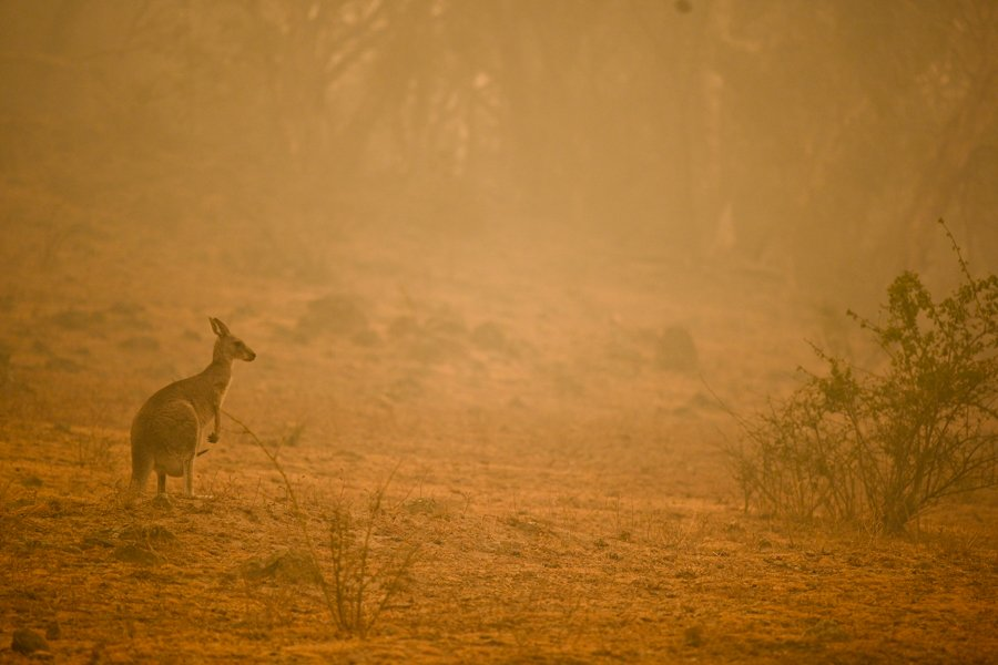 Are you feeling the heat? Psychological responses to bushfires and climate change.