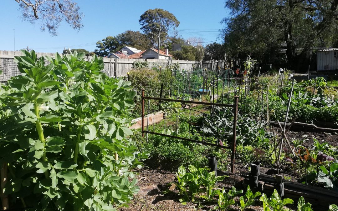 Sustainable food growing